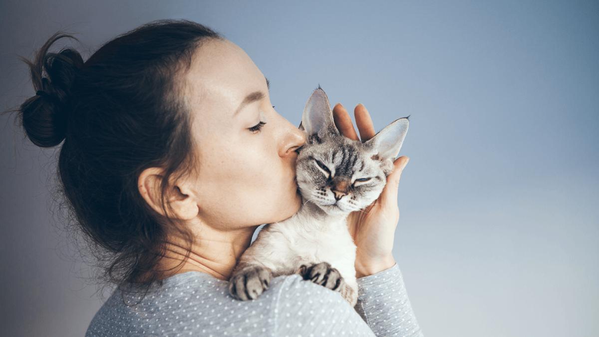 Die 10 besten Katzenrassen für Allergiker