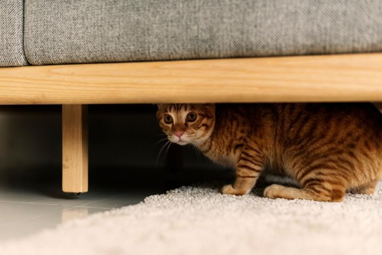 10 Anzeichen, dass sich Deine Katze unwohl fühlt