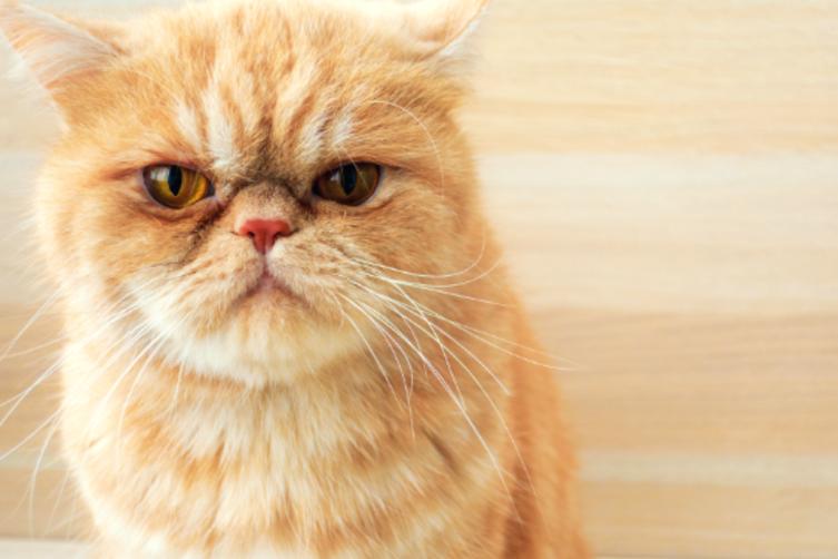 Anzeichen für eine gestresste Katze
