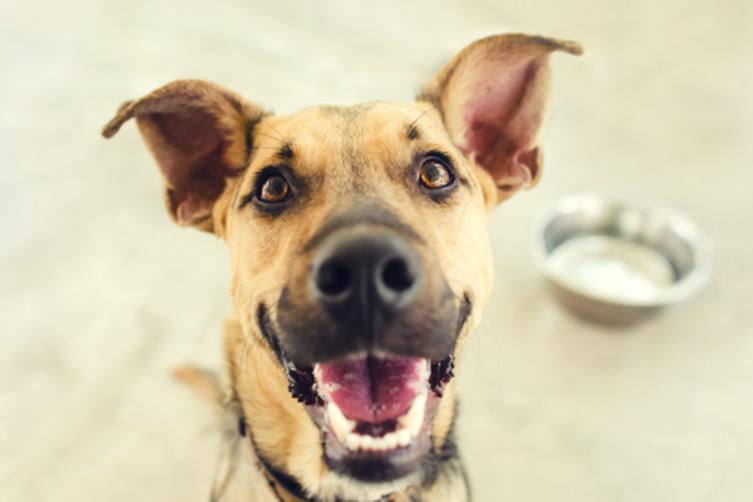 7 Dinge, die Dein Hund unbedingt braucht
