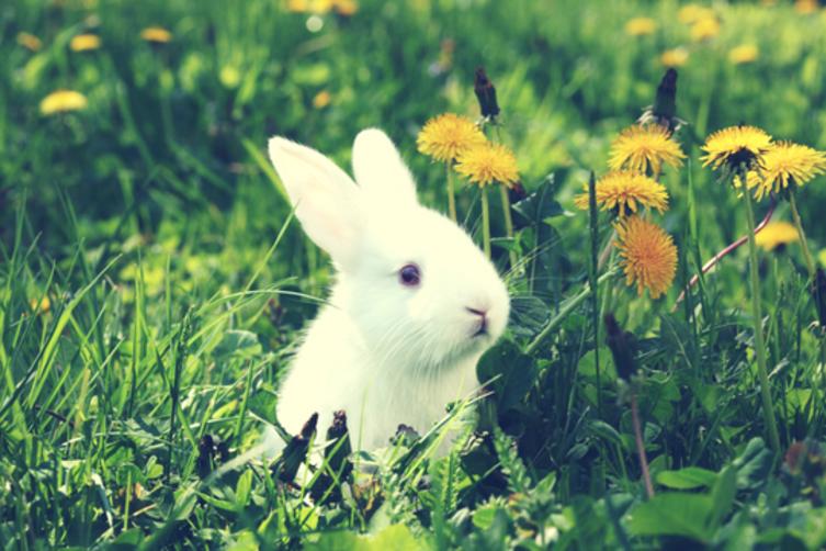 9 Dinge, die Du über Kaninchen bestimmt nicht wusstest