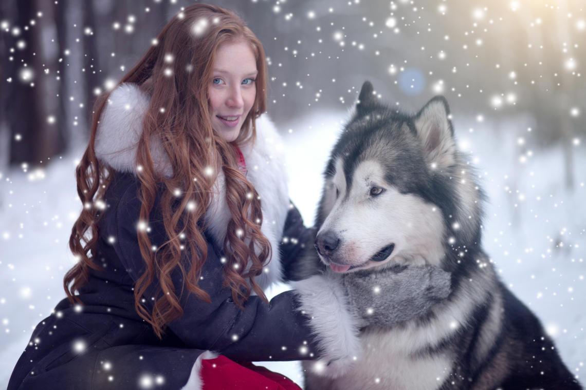Rasseportrait: Alaskan Malamute