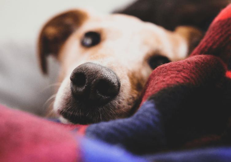 Arthrose beim Hund: Alles, was Du wissen musst