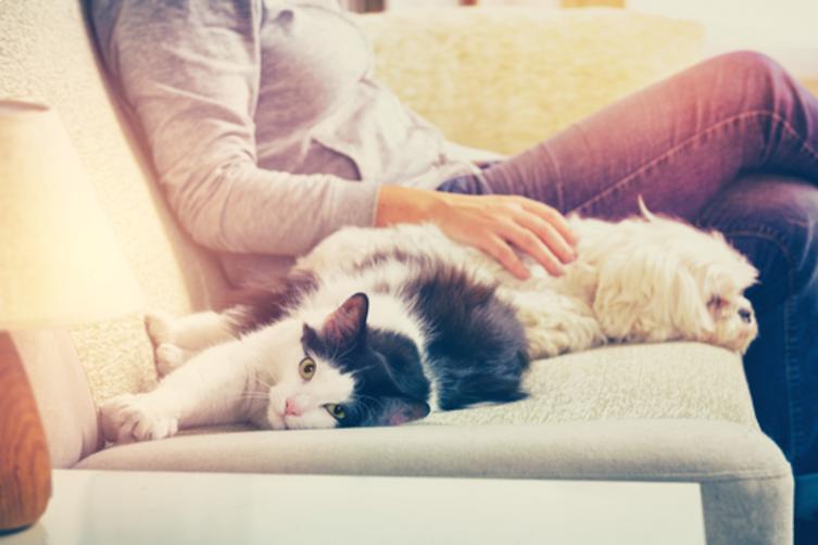 Bist Du ein Hunde- oder Katzenmensch? Finde es raus