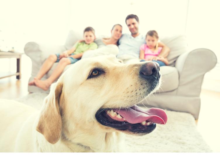 Brauchen Hunde nur eine Bezugsperson?