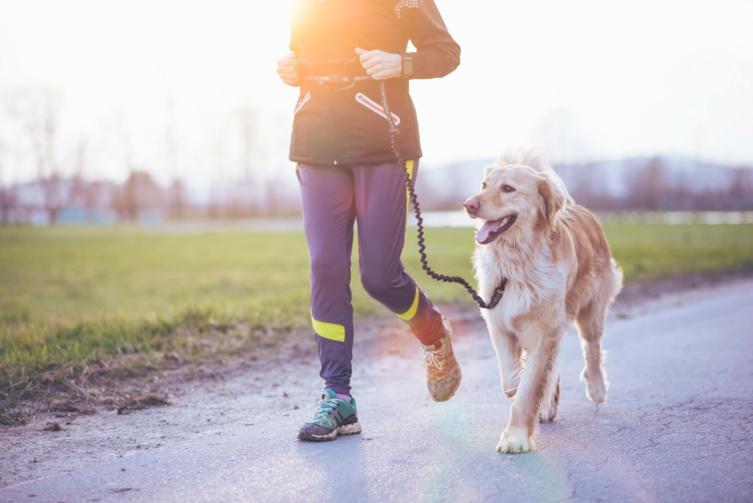 Canicross: Mit dem Hund durchs Gelände joggen