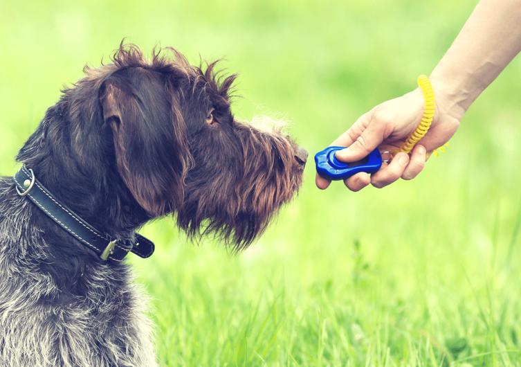 Clickertraining mit dem Hund: Alles Wichtige einfach erklärt