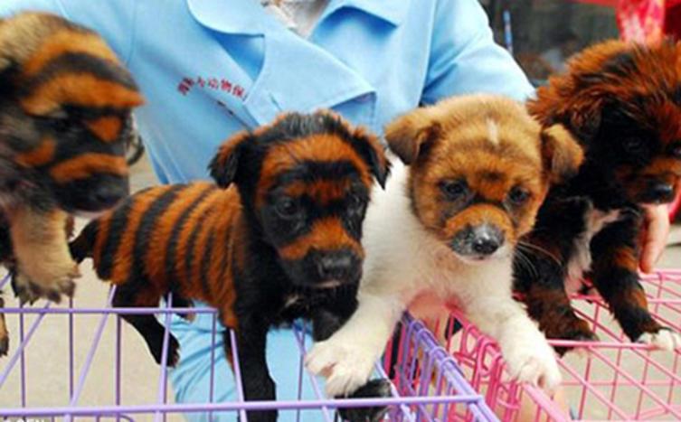 Marktware Hund – Das sind keine Stofftiere, sondern echte Hunde!