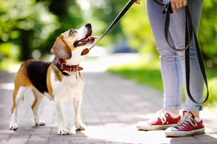 Das sind die beliebtesten Hundenamen