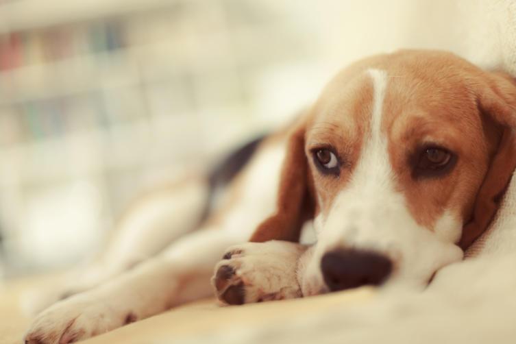 Die 10 häufigsten Hundekrankheiten im Überblick