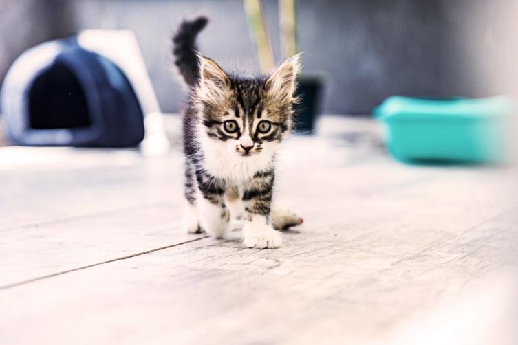 Die Katze kommt nach Hause – das ist jetzt wichtig