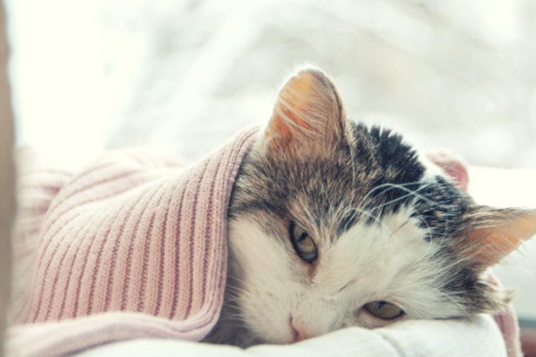 Die zehn häufigsten Katzenkrankheiten