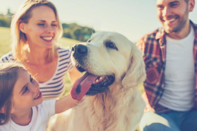 Diese 10 Hunderassen sind echte Familienhunde