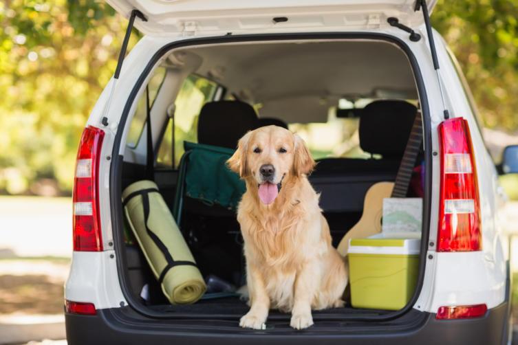 Diese 11 Dinge müssen in die Reiseapotheke für Hunde