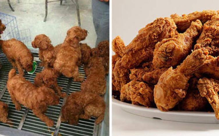 Essen oder streicheln? Diese Tiere sehen aus wie Nahrungsmittel!