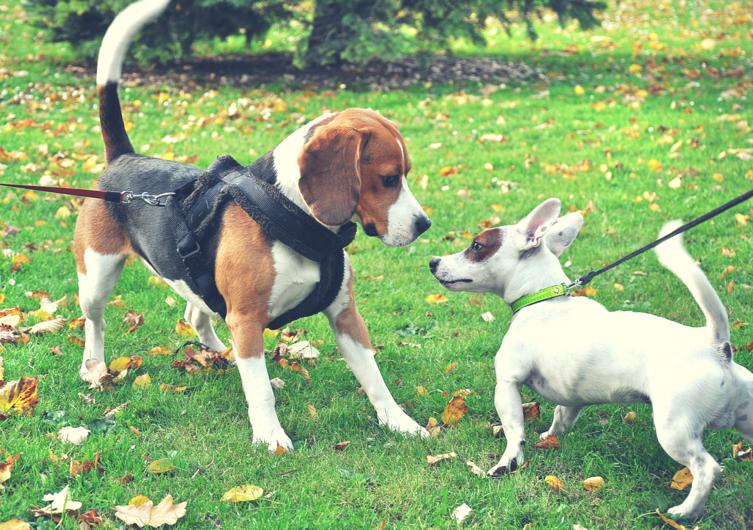 Entspannt an der Leine: Fünf Tipps für positive Hundebegegnungen