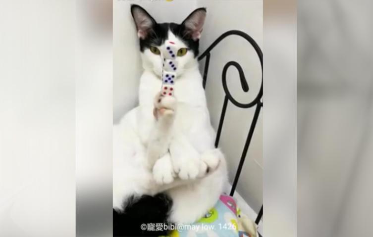 Diese Katze ist eine wahre Balance-Künstlerin