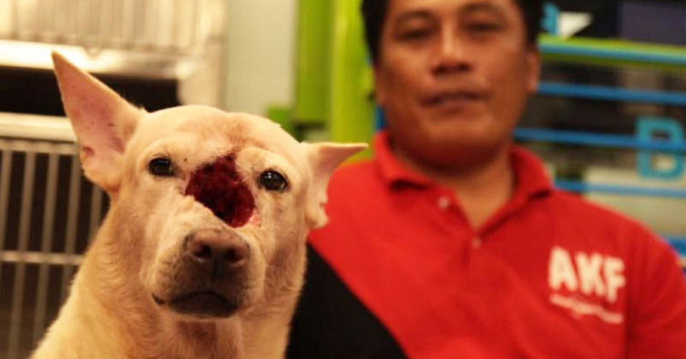 Es ist so schrecklich – Dieser Hund hat ein großes Loch im Schädel!