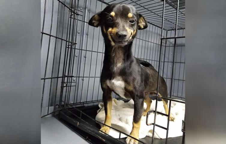 Dieser Hund hat ein zauberhaftes Lächeln – und wurde sofort adoptiert!