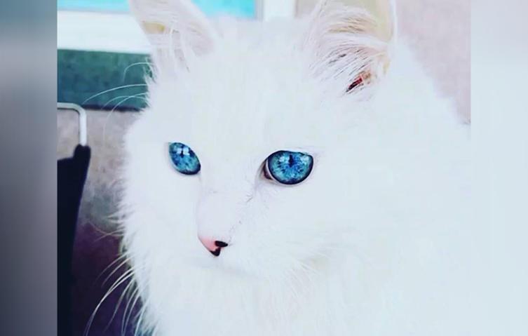 Ist das die Katze mit den schönsten Augen der Welt?