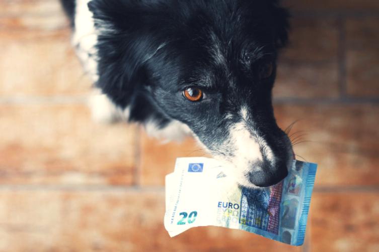 Fakten rund um die Hundesteuer
