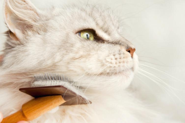 Fellpflege bei der Katze – das ist wichtig