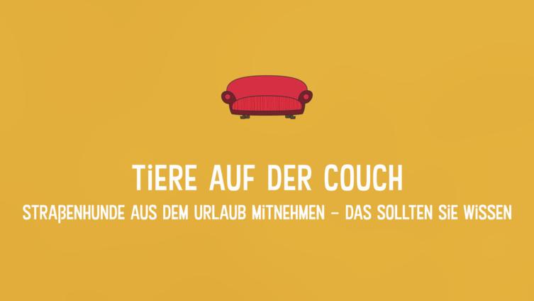 Folge 6: Straßenhunde aus dem Urlaub mitbringen   Tiere auf der Couch