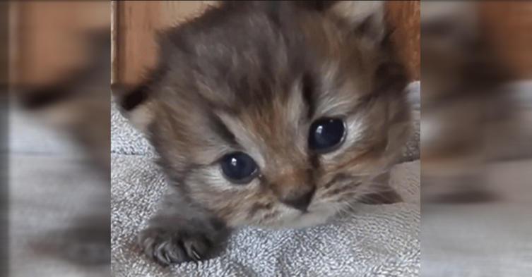 12 Gründe, warum Katzen einfach die Besten sind