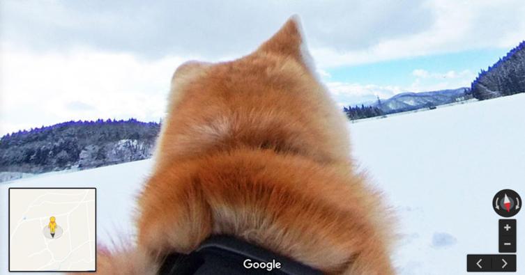 Diese zwei Hunde arbeiten für Google Streetview!