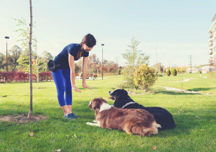 Grundkommandos für Hunde