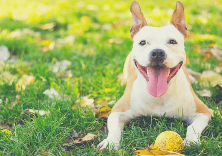 Hund Aus beibringen – So klappt's