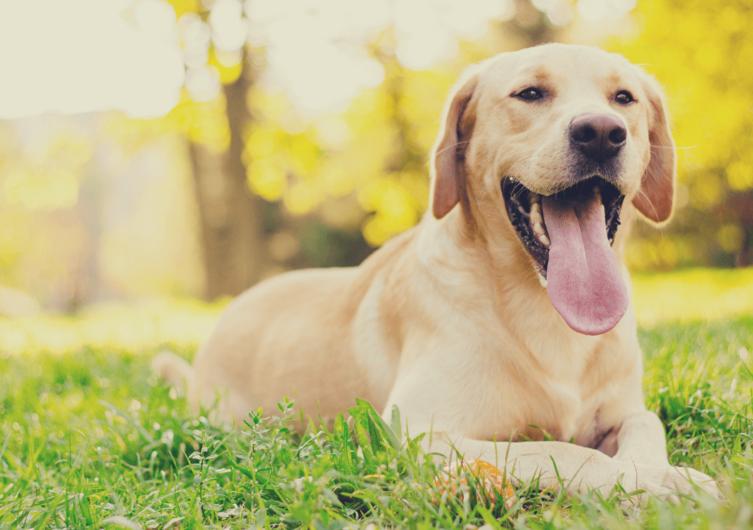 Hund Platz beibringen – So klappt's