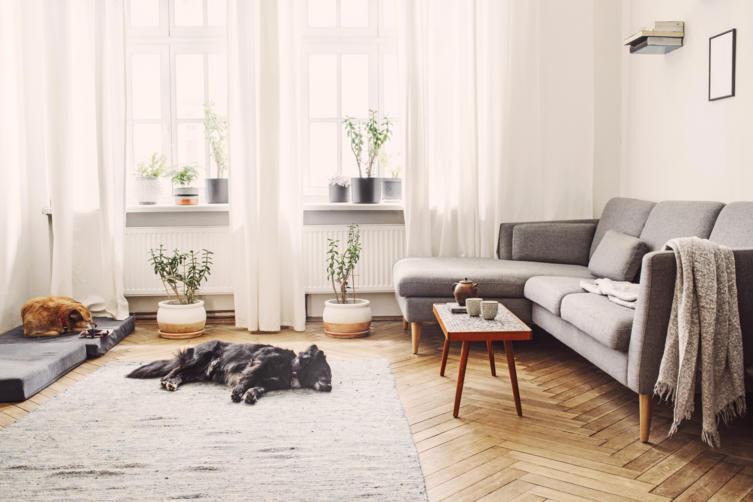Hundehaltung in der Mietwohnung: Welche Rechte habe ich?