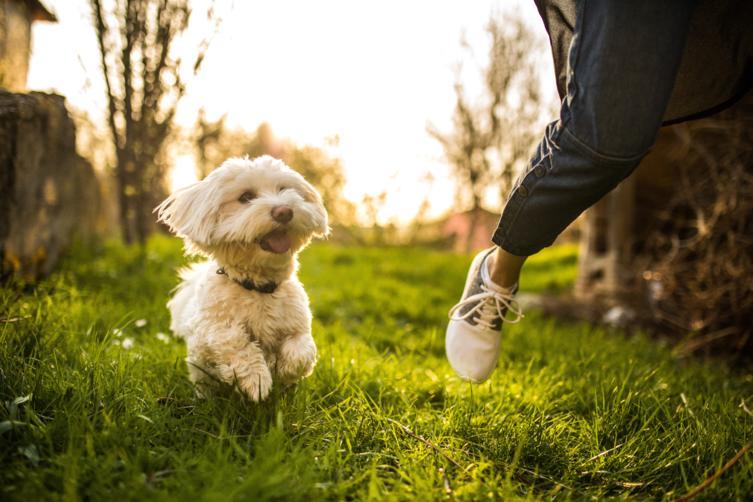 Hundesprache richtig deuten – Was will mir mein Hund sagen?
