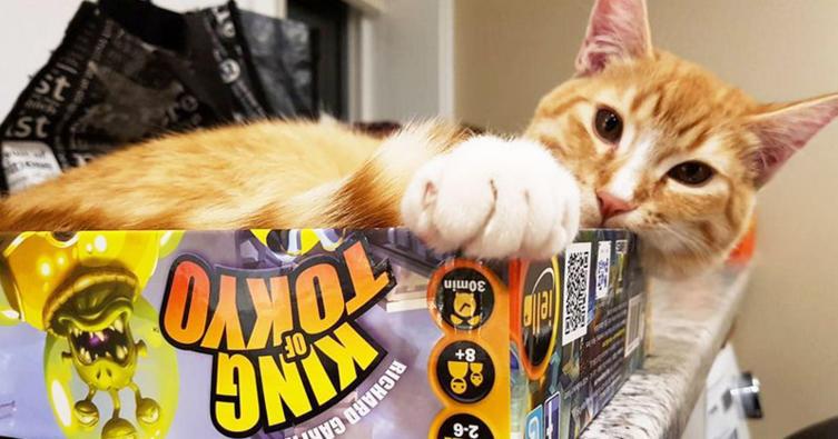 So lustig! Vier Katzen und ein Gesellschaftsspiel
