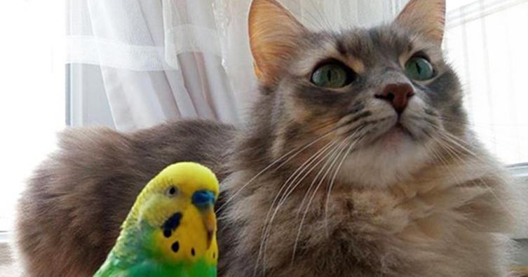 Diese Vögel stehen unter besonderem Katzenschutz!