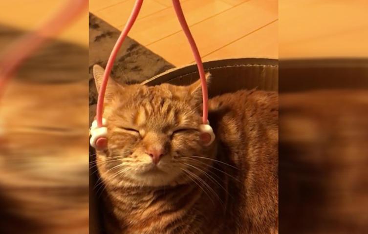 Dieses Massagegerät sieht ziemlich seltsam aus – doch der Katze gefällt es bestens