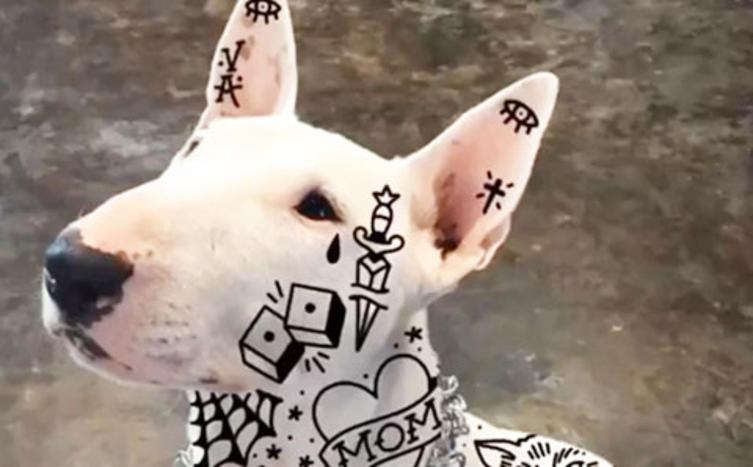"""Der neueste Trend: """"Tätowierte"""" Hunde!"""