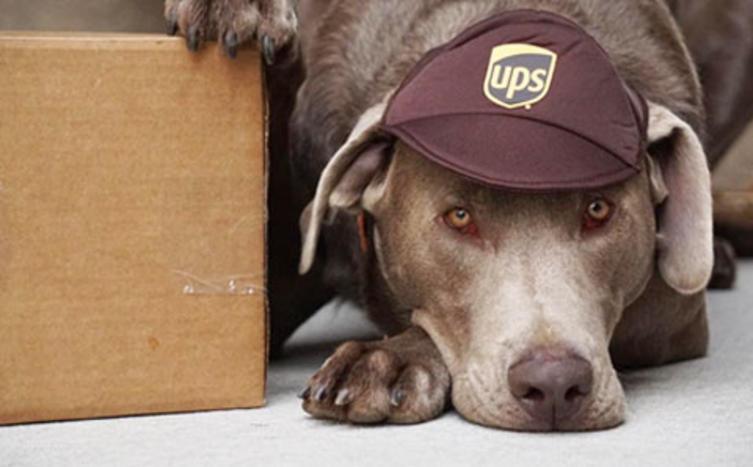 Hunde und Postboten – Freunde oder Feinde?