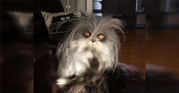 Katze oder Werwolf? Über dieses Tier rätselt das Netz