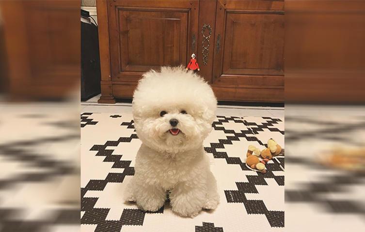 Hat dieser Hund die flauschigste Frisur der Welt?