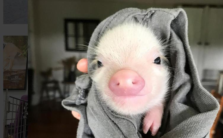 Ich glaub mein Schwein pfeift!