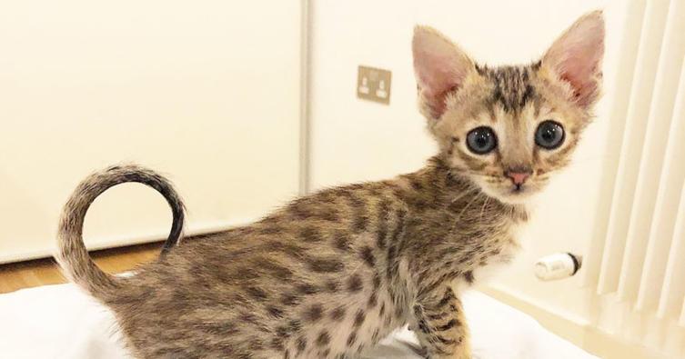 Das sind die 10 süßesten März-Katzen