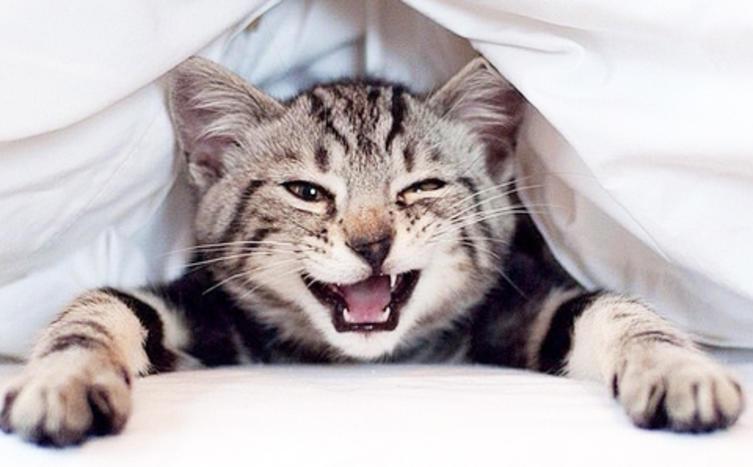 Diese Katzen sehen ganz besonders aus!