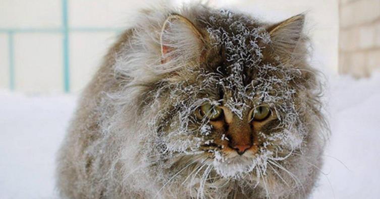 """Haben Katzen wirklich so ein """"dickes Fell"""" oder frieren sie auch?"""