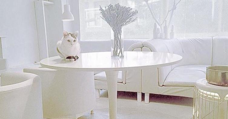 Einen Kaffee, einen Kuchen und eine Katze, bitte!
