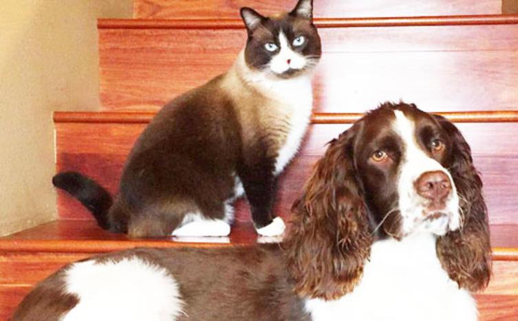 Wenn Katzen zum Türsteher werden…