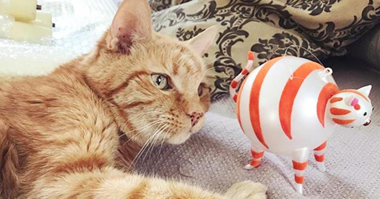 Das sind die schönsten Weihnachtsgeschenke für Katzenbesitzer!