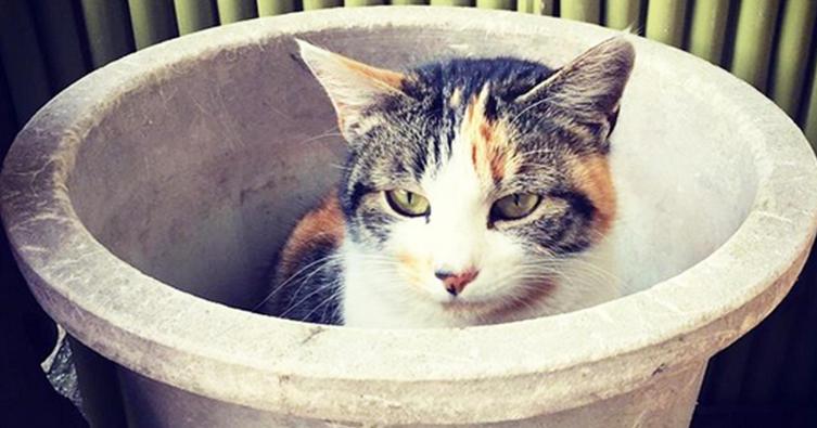 Schläft eure Katze auch an diesem Ort?