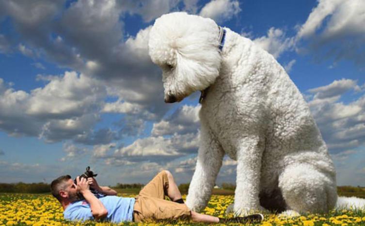 Kleiner Hund ganz groß!